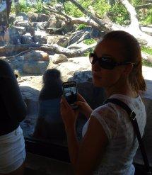 Monkeys taking pictures of monkeys